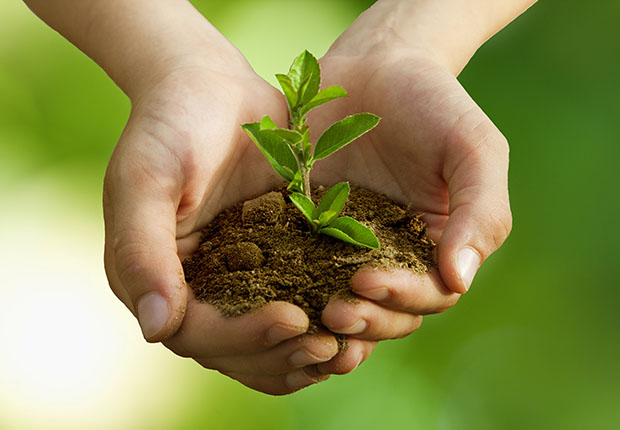 """Die Zukunft ist ein zartes Pflänzchen. Das Förderprogramm der Stadtwerke Tecklenburger Land """"Fit für die Zukunft"""" soll dazu beitragen, dass das Pflänzchen zu einem starken Baum heranwächst. (Foto: Carballo_adobestock.com)"""