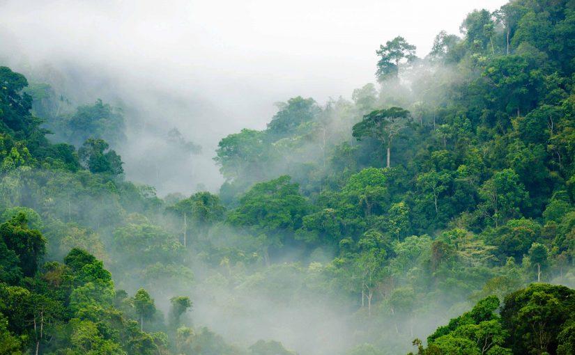 Wie Westfalen in der Schweiz den Regenwald schützen