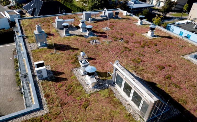 Auf den begrünten Dächern finden sich vor allem Sukkulenten, Stauden und Gräser. Über die Jahre entwickelt aber jedes Dach seine eigene Vegetation. (Foto: FH Münster/Jens Peters)