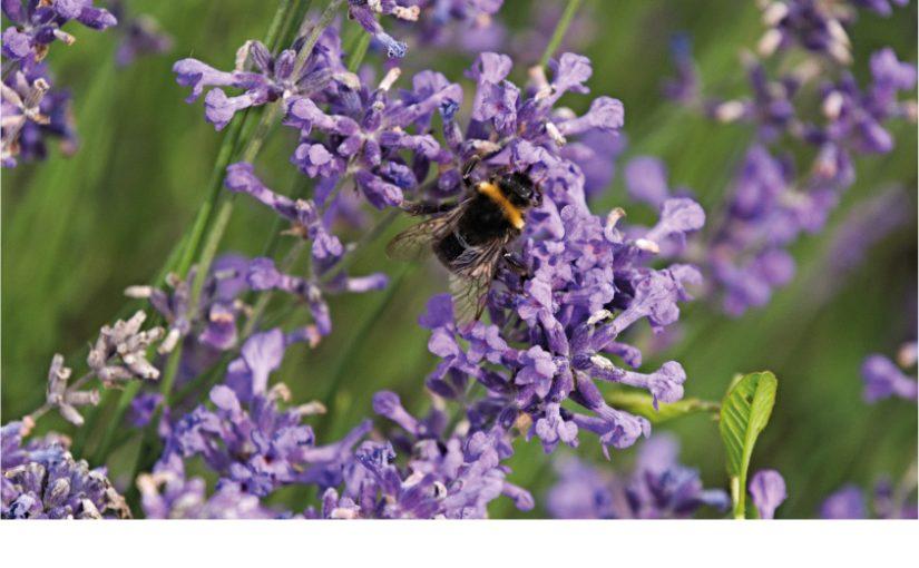 Bienenaktion im Marktkauf Büren
