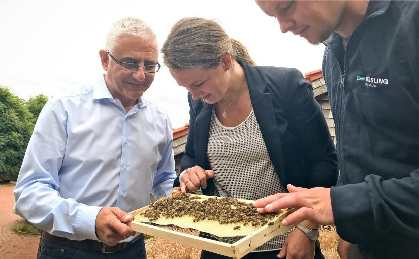 WESSLING: Bienen als verbindendes Element in der Mitarbeiterschaft