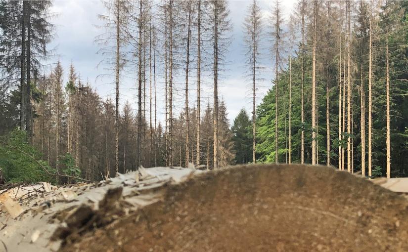 Viel Schadholz im Wald. Bildcredit: © HPE