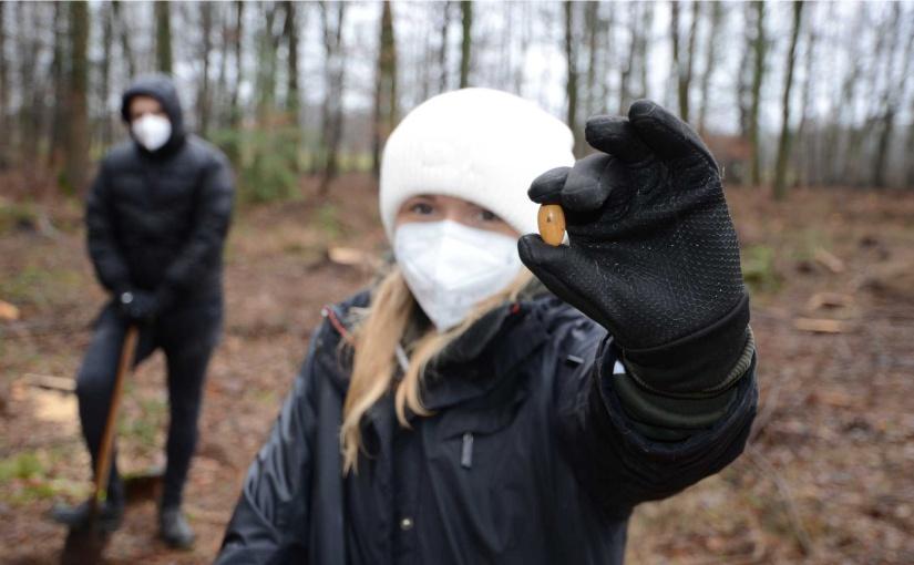 Neben den 200 Setzlingen wurden auch 1200 Kastanien und Eicheln in die Erde gebracht. Carla Stegkemper, Auszubildene der Gauselmann Gruppe, freute sich bei der Aktion dabei sein zu dürfen. - Foto: Gauselmann Gruppe