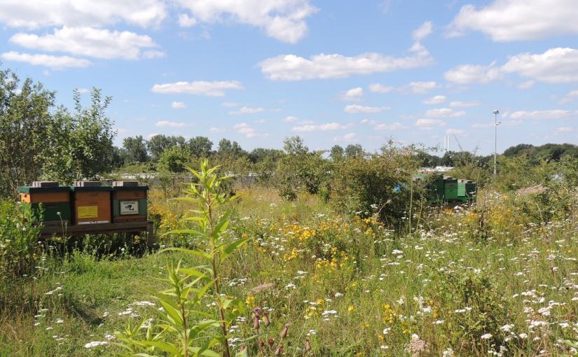 Naturschutz auf Firmengelände: 700.000 Bienen bei Koch International