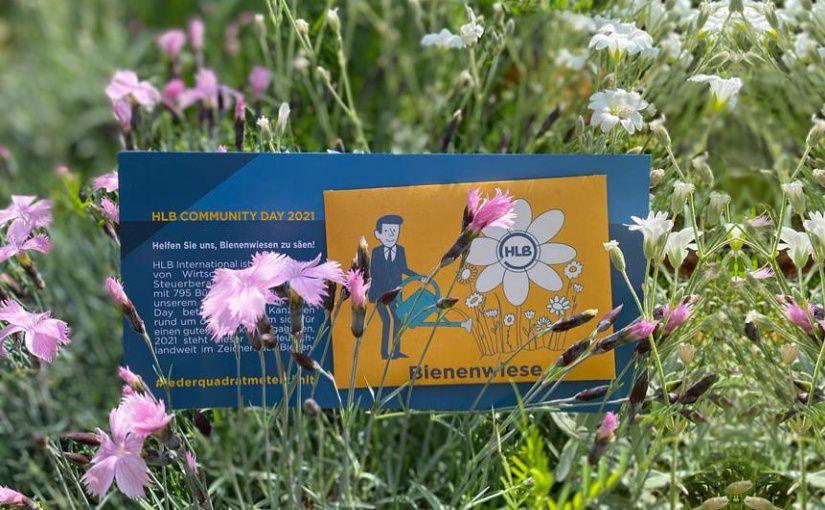 HLB Schumacher feiert Community Day und engagiert sich für heimische Bienen